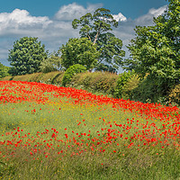 Buy canvas prints of Field Poppies and Oilseed Rape by Richard Laidler