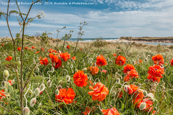 Seaside Poppies Canvas print by Richard Laidler