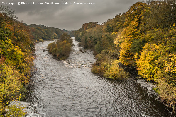 Autumn on the River Tees at Winston 2 Canvas Print by Richard Laidler