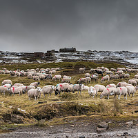 Buy canvas prints of Winter Feeding at Coldberry by Richard Laidler