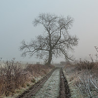 Buy canvas prints of Ash Tree Silhouette in Frost and Fog by Richard Laidler