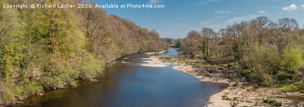 The River Tees at Downstream at Whorlton in Spring Canvas Print by Richard Laidler
