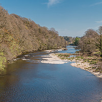 Buy canvas prints of The River Tees at Downstream at Whorlton in Spring by Richard Laidler