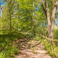 Buy canvas prints of Stairway Through The Woods by Richard Laidler