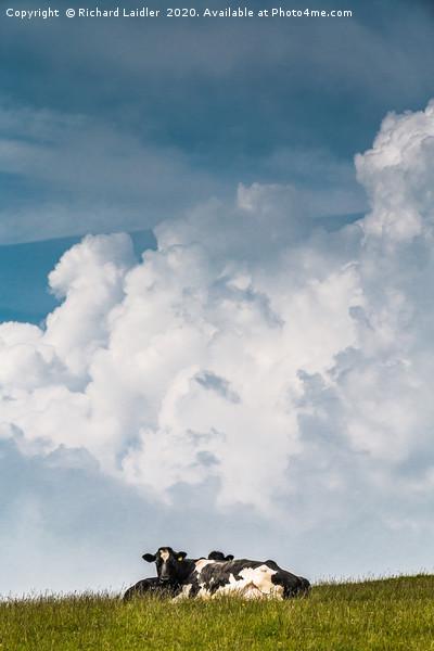 Bovine Big Sky Canvas Print by Richard Laidler