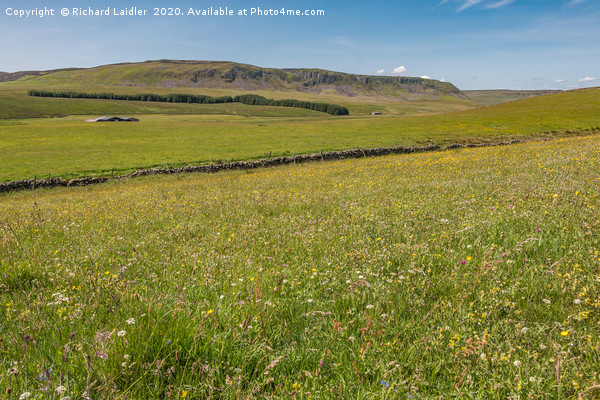 Wild Flower Meadow at Birk Rigg , Teesdale Canvas Print by Richard Laidler