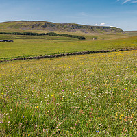Buy canvas prints of  Wild Flower Meadow at Birk Rigg , Teesdale by Richard Laidler