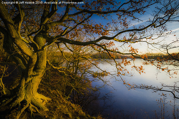 Golden Lakeside Tree Canvas print by Jeff Hobkirk