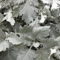 Buy canvas prints of foliage winter season nature background by goce risteski