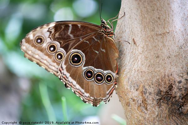 butterfly on tree close up Canvas Print by goce risteski