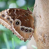 Buy canvas prints of butterfly on tree close up by goce risteski
