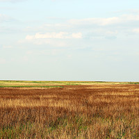 Buy canvas prints of field autumn season nature landscape by goce risteski