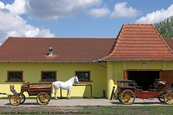 white horse and old carriage on ranch Canvas Print by goce risteski
