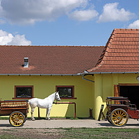 Buy canvas prints of white horse and old carriage on ranch by goce risteski