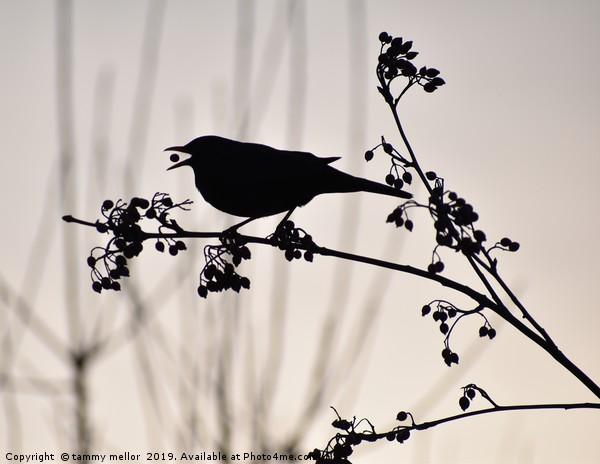 black bird silhouette  Canvas print by tammy mellor