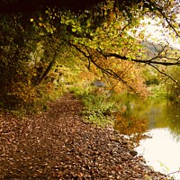 Buy canvas prints of Autumn Walk. by Tony Williams. Photography