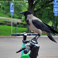 Buy canvas prints of Modern Crow Takes City Bike by Taina Sohlman