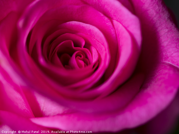 Close up of petals on pink rose  Canvas print by Mehul Patel