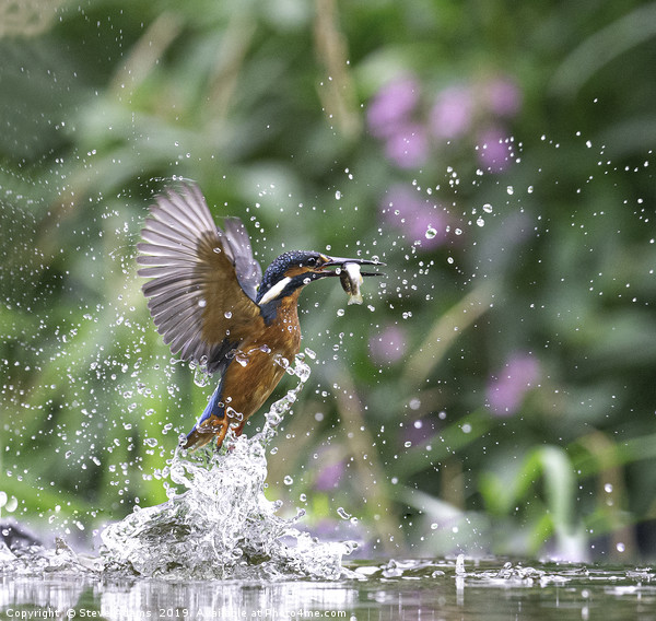 Kingfisher with fish  Canvas print by Steve Adams