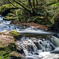 Buy canvas prints of Golitha Falls.   by Ian Taylor