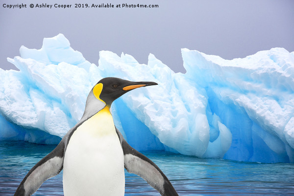 Penguin iceberg Canvas print by Ashley Cooper