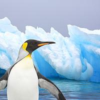 Buy canvas prints of Penguin iceberg by Ashley Cooper