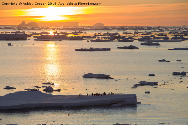Iceberg sunset. Canvas Print by Ashley Cooper
