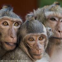 Buy canvas prints of The monkeys of Wat Leu Temple Sihanoukville Cambodia by Mario Koufios