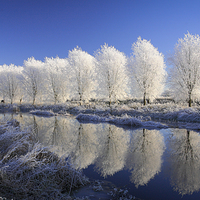 Buy canvas prints of  Mirror Trees by Andy B