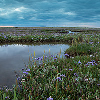 Buy canvas prints of Wild flower display on the salt marsh by Stuart Hill