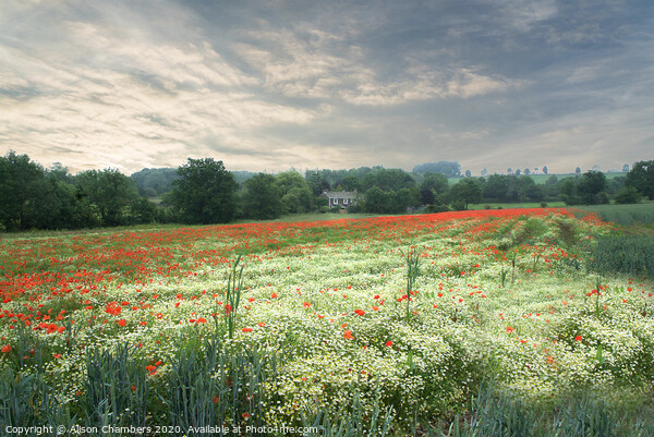 Poppy and Chamomile Field Canvas Print by Alison Chambers