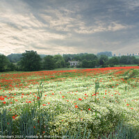 Buy canvas prints of Poppy and Chamomile Field by Alison Chambers