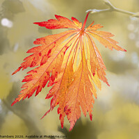 Buy canvas prints of Bright Autumn by Alison Chambers
