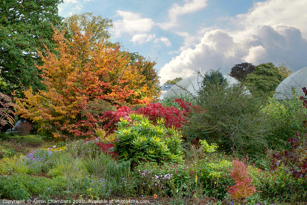 Sheffield Botanical Gardens Autumn Border Framed Mounted Print by Alison Chambers