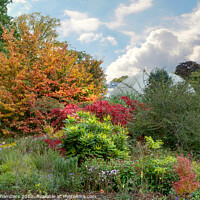 Buy canvas prints of Sheffield Botanical Gardens Autumn Border by Alison Chambers