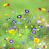 Buy canvas prints of A Joyful Jumble  by Alison Chambers