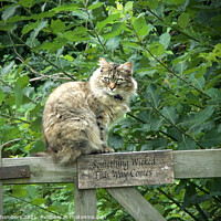 Buy canvas prints of Cat on a Gate by Alison Chambers