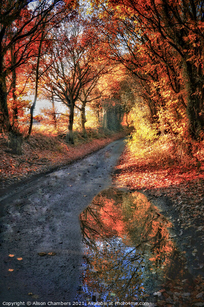 Autumn Reflection Framed Mounted Print by Alison Chambers