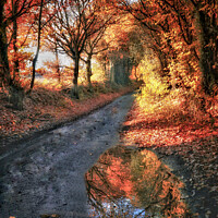 Buy canvas prints of Autumn Reflection by Alison Chambers