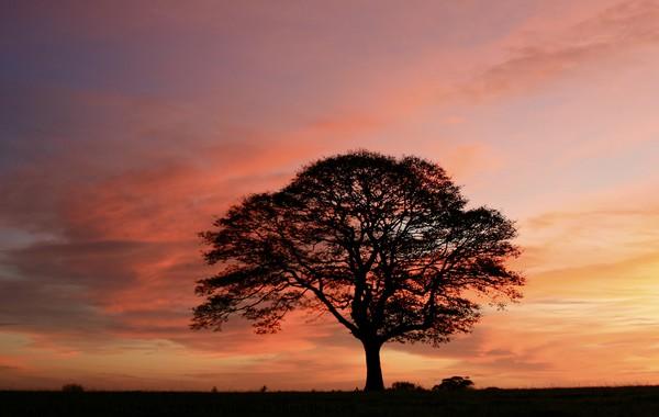 Isolated tree at sunrise Canvas print by Simon Johnson