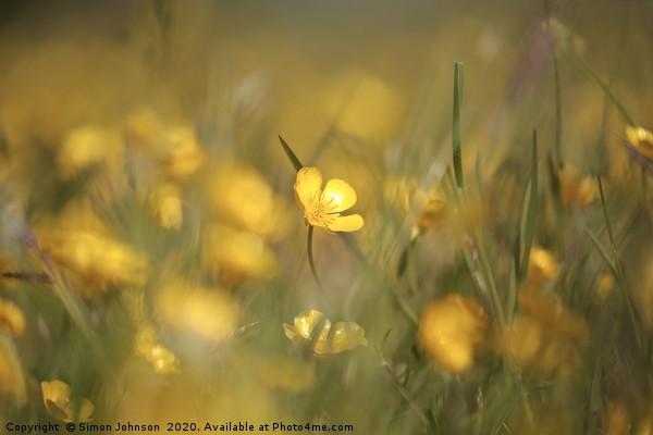 Buttercups in weild flower meadow Canvas print by Simon Johnson