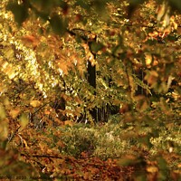 Buy canvas prints of autumn Colour by Simon Johnson