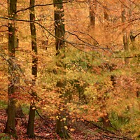 Buy canvas prints of Autumn Colour by Simon Johnson