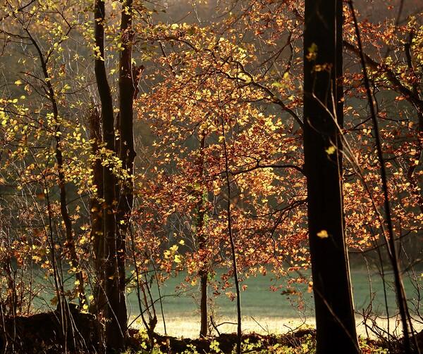 Autumn Colour Acrylic by Simon Johnson