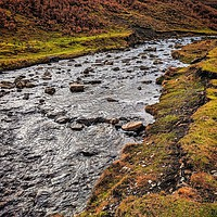 Buy canvas prints of Bollihope Burn in Autumn by Aimie Burley