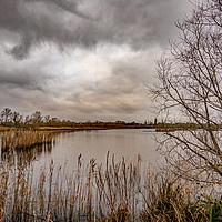 Buy canvas prints of A view across Rockland Broad, Norfolk by Chris Yaxley