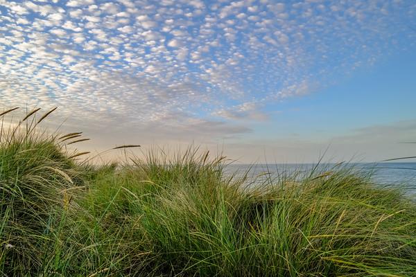 Sand dunes on the Norfolk coast Canvas Print by Chris Yaxley