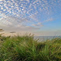 Buy canvas prints of Sand dunes on the Norfolk coast by Chris Yaxley