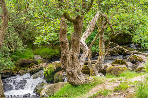 Ceunant Mawr, Llanberis water fall, North Wales. Framed Print by Chris Yaxley