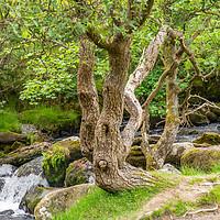 Buy canvas prints of Ceunant Mawr, Llanberis water fall, North Wales. by Chris Yaxley